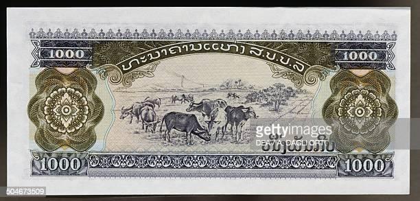Kip banknote, 1990-1999, reverse, cattle grazing. Laos, 20th century.