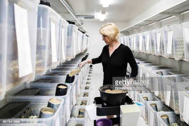 Kirsi Siikonen farmer feeds crickets a mixture of grain using EntoCube patented technology at the Siikonen family farm in Forssa Finland on Tuesday...