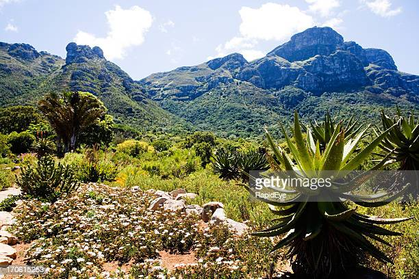 kirstenbosch botanical garden - western cape province stock pictures, royalty-free photos & images