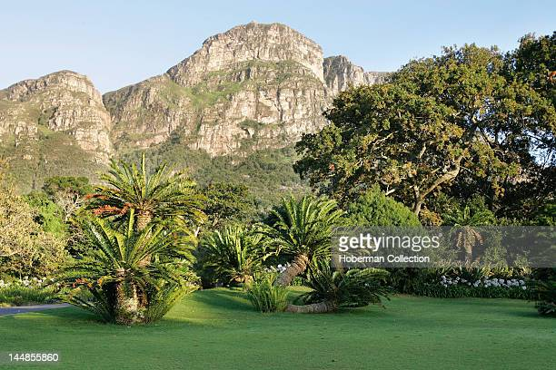 Kirstenbosch Botanical Gardens with Table Mountain Range Constantia Cape Town South Africa