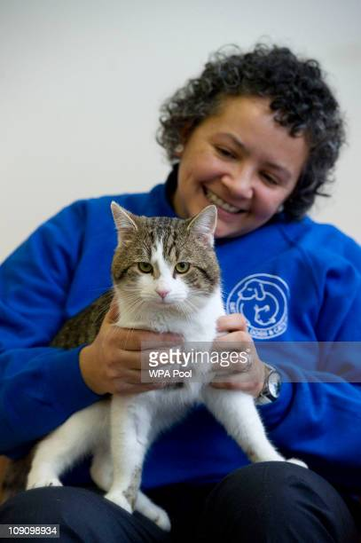 """Kirsty Walker, Head of Cats at Battersea Dogs and Cats Home in London, holds """"Larry"""" before he is taken to Downing Street on February 15, 2011 in..."""