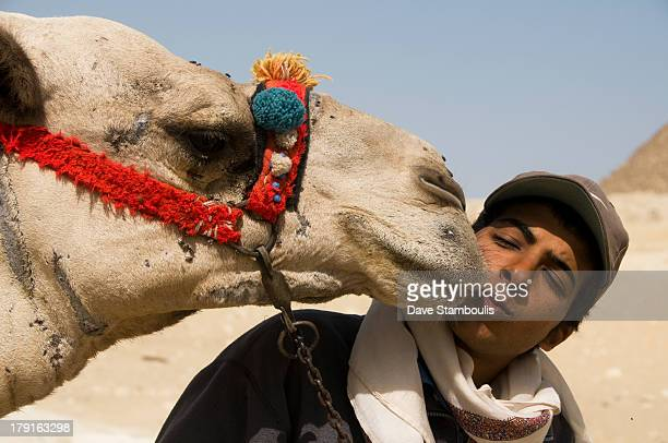CONTENT] kissed by a camel at the Great Pyramids of Giza in Cairo Egypt