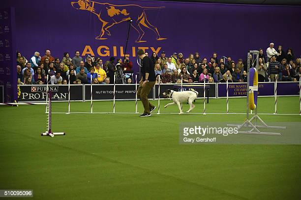 Kisses an All American dog competes in the Westminster Kennel Club and AKC Meet and Compete at Pier 92 on February 13 2016 in New York City