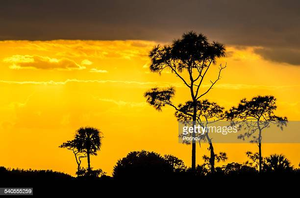 kissimmee prairie - kissimmee stock pictures, royalty-free photos & images