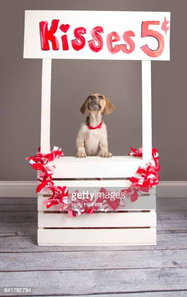 Kissing Booth Puppy