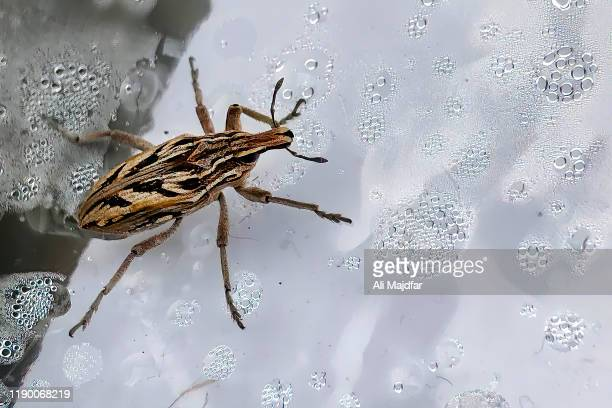 kissing bug - trypanosoma stock pictures, royalty-free photos & images