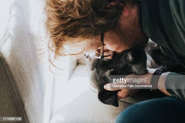 kissing dog - 動物の行動 ストックフォトと画像