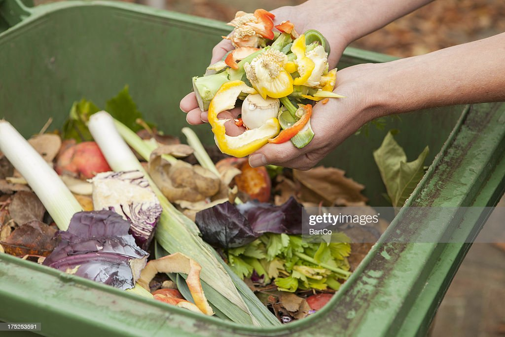 Image result for food waste royalty free image