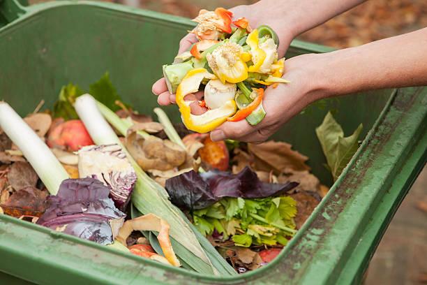 Image result for food waste royalty free image