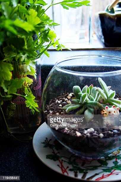 Kitchen Terrarium