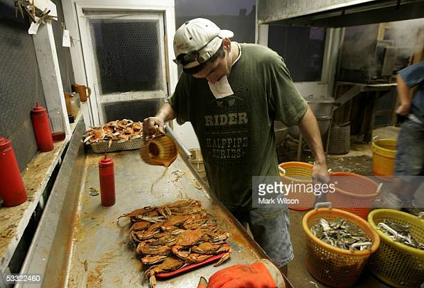 Kitchen worker Gary Goins sprinkles a seasoning on a plate of Blue Crabs at Abner's Crabhouse August 3 2005 in Chesapeake Beach Maryland The Maryland...