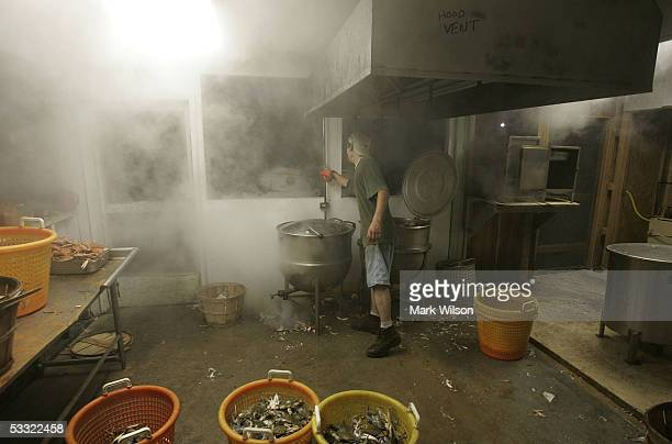 Kitchen worker Gary Goins steams a pot of Blue Crabs at Abner's Crabhouse August 3 2005 in Chesapeake Beach Maryland The Maryland Blue Crab has been...