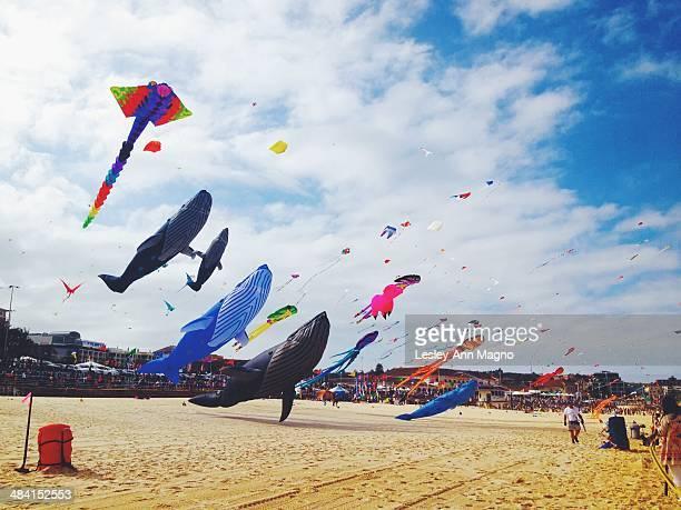 Kite festival at Bondi Australia