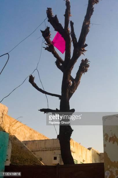kite festival of rajasthan - kite festival in jaipur stockfoto's en -beelden