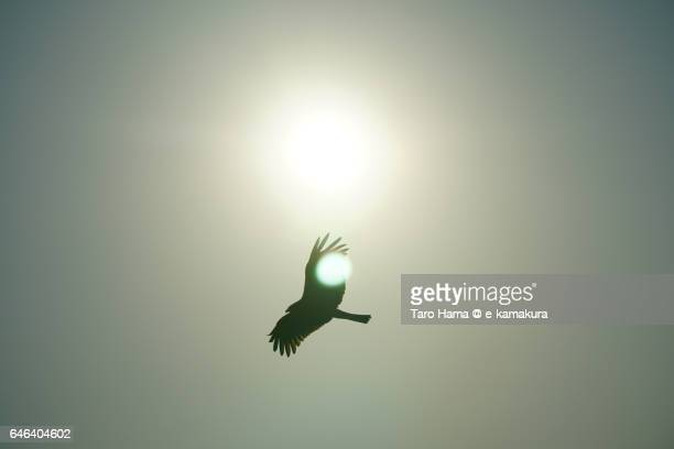 A kite flying around sun