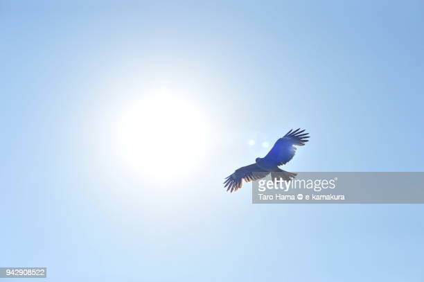 a kite flying around the sun in japan - 神奈川県 ストックフォトと画像