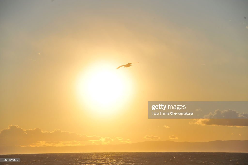 A kite flying in the sunset sky and beach in Kamakura city in Kanagawa prefecture in Japan : ストックフォト