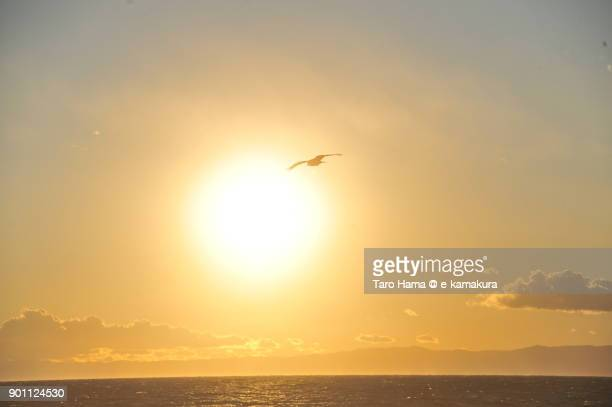 A kite flying in the sunset sky and beach in Kamakura city in Kanagawa prefecture in Japan