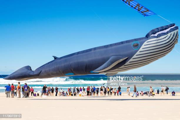 A kite in the shape of a whale is seen during the Festival of the Winds in Bondi on September 08 2019 in Sydney Australia Festival of the Winds is...