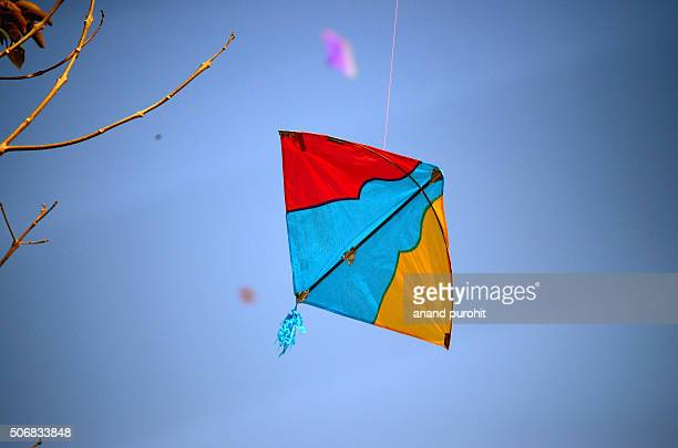Kite in tree, Ahmedabad, Gujarat, India