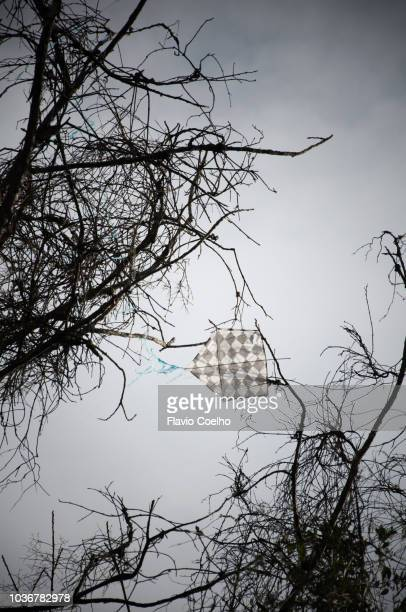 Kite stuck in dry tree branches