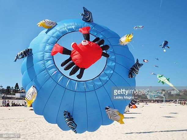 Kites at a beach in Australia - sea creatures kite