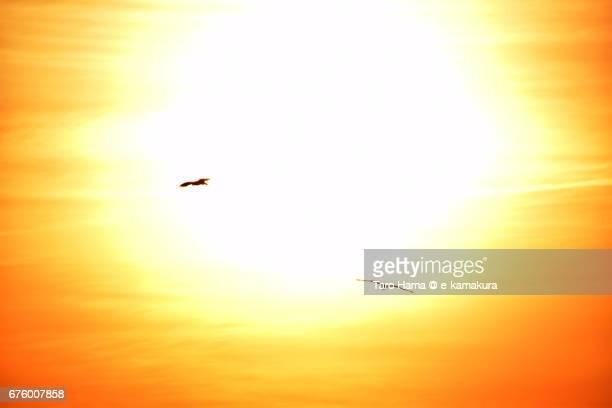 Kites flying around evening sun