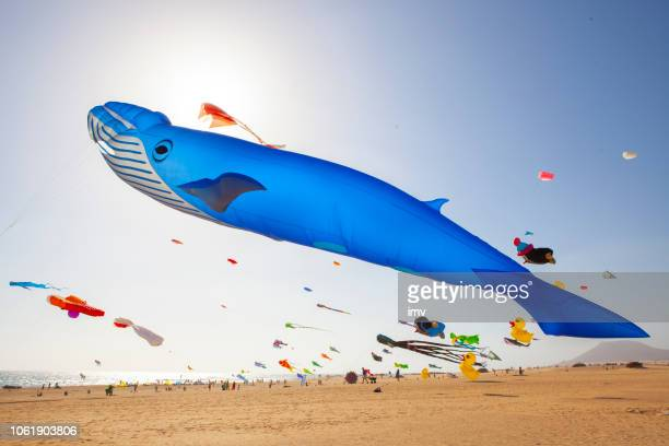 kites flying at the international kite festival in fuerteventura - cetacea stock photos and pictures