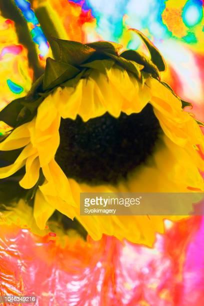 Kitschy sunflower head