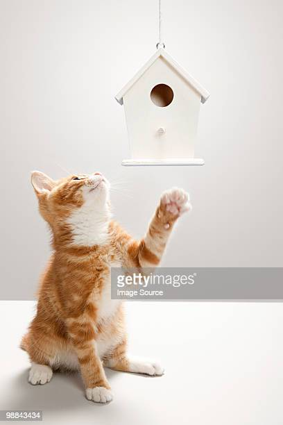 kitten and birdhouse - birdhouse stock photos and pictures