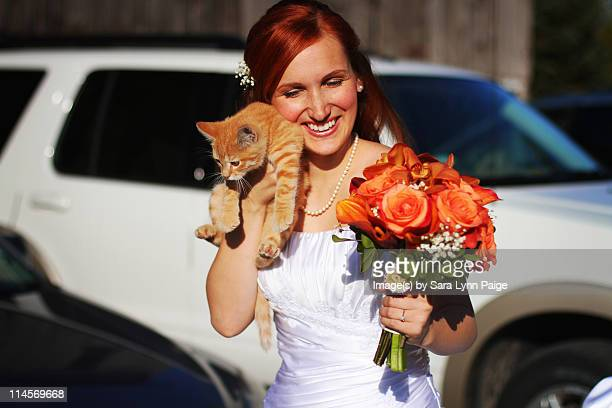 kitten and bride - ginger lynn stock pictures, royalty-free photos & images