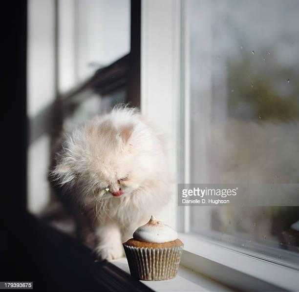 Kitten And Cupcake On Windowsill
