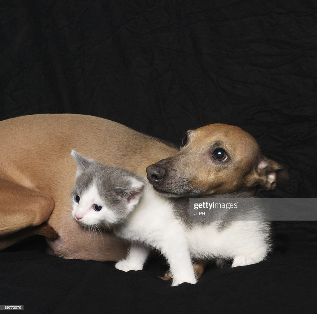 Kitten and dog on black background : Bildbanksbilder