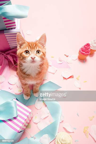 Kitten and gifts