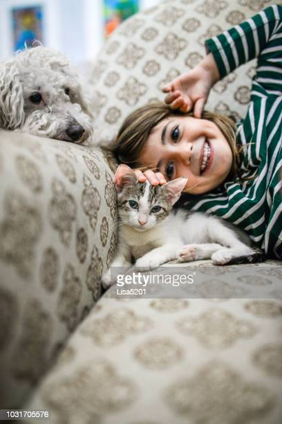 kitten and kid - dog and cat stock photos and pictures