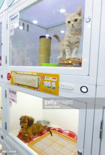 A kitten and puppy are kept in display cages at a Zoo pet shop in Tokyo's Roppongi district on Dec 5 2017 ==Kyodo