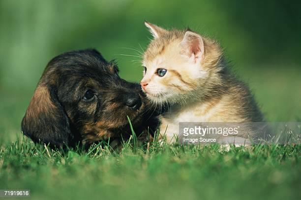 kitten and puppy on lawn - niedlich stock-fotos und bilder