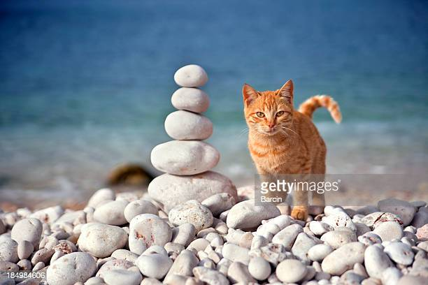 Kitten and stack of stones