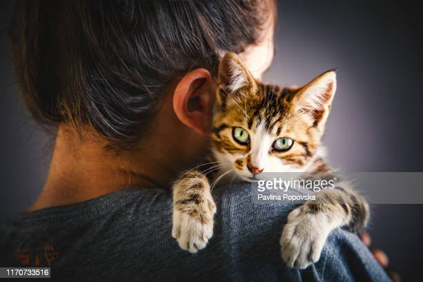 kitten and the owner - affectionate stock pictures, royalty-free photos & images