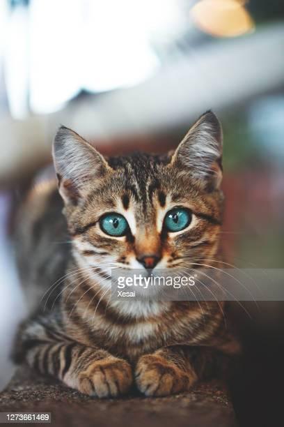 gattino a casa parete giardino - composizione verticale foto e immagini stock