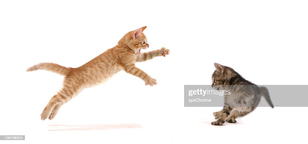 Kitten Attack ! : Stock Photo