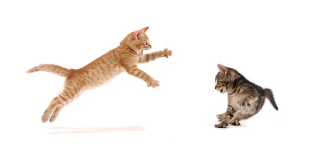Kitten Attack ! Wall Art