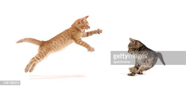 kitten attack ! - domestic cat stock pictures, royalty-free photos & images