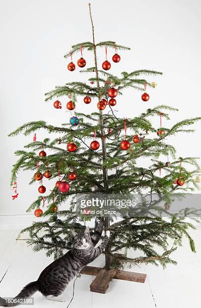 kitten attacking christmas tree - sapin de noel humour photos et images de collection