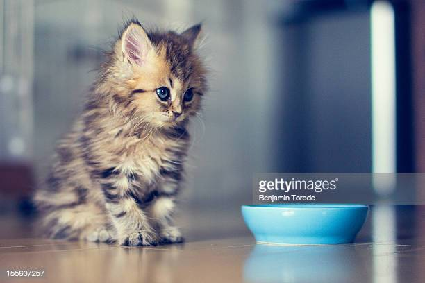 Kitten beside bowl