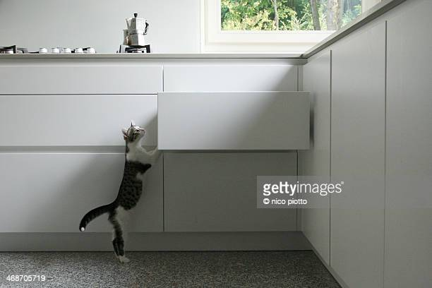 Kitten climbing kitchen drawer
