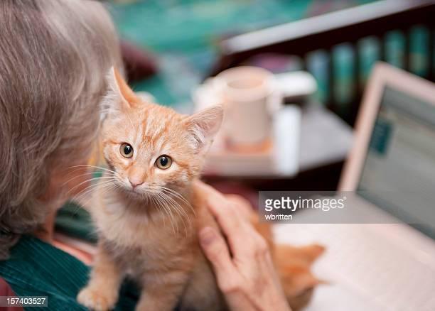 Kitten Heel-Companion