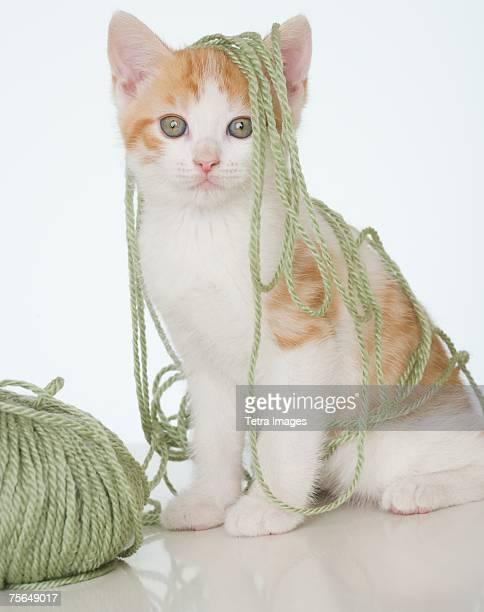 Kitten covered in yarn