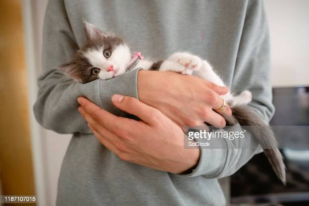 kitten cuddles - kitten stock pictures, royalty-free photos & images