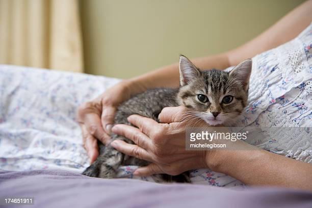 Katze Kuscheln Sie sich in eine ältere senior's hands